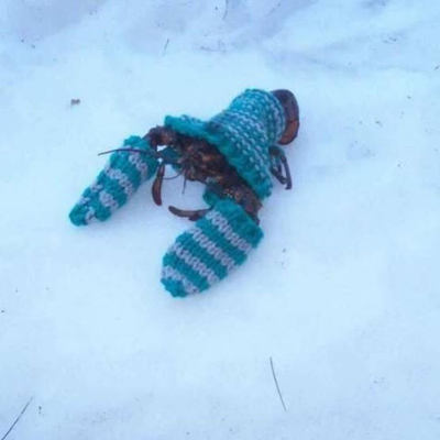 cuddlycrustacean@mastodon.social