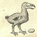 :dodo: