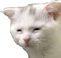 :tiredcat: