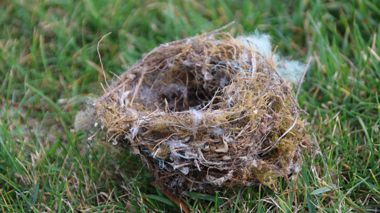 A small bird's nest made of lichen, twigs, and some kind of fur, sitting on the ground